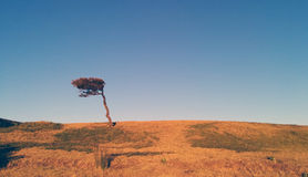 The Wind Blown Tree. Taken in Botany National Park, Sydney, Australia. I came across this wind blown tree all on its own and loved the minimalist idea Stock Image