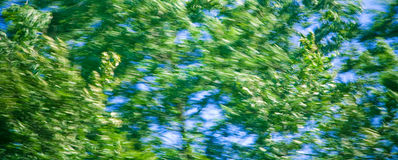 Wind Blown Trees. Motion blur image of leaves in trees being blown from a strong wind Stock Photography