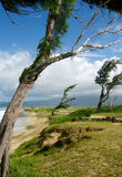 Wind-Blown Trees - Fort Hase Beach. Coastal trees at the Fort Hase Beach on Marine Corp Base Hawaii (MCBH) show the long term effects of the constant wind Royalty Free Stock Photo
