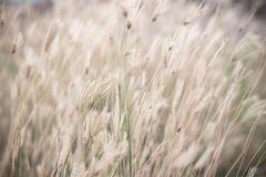 Wind blown wild grass Stock Photos