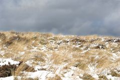 Wind Blown Yellow Grass Covered In Snow - Tongariro Crossing, New Zealand Stock Photo