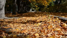 Wind blows autumn leaves stock footage