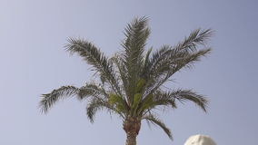 The wind blows the palm leaves on sky background. The wind blows the palm leaves on sky background, slow motion stock footage