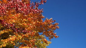 Wind blows tree in autumn stock video footage