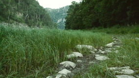 Wind blows through vegetation in a valley stock footage