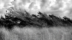 Wind in the branches Royalty Free Stock Image