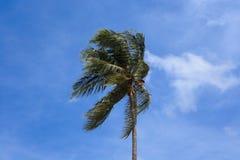 Wind brennt Kokosnussbaum durch Stockfoto
