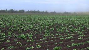 Wind brennt wegpartikel des fruchtbaren Bodens gepflanzt mit Kartoffelacker durch stock footage