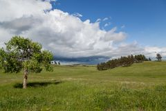 Wind Cave Park Landscape. A single tree in the grass prairie of Wind Cave National Park with rolling hills, a group of evergreens, and an ominous storm cloud in stock images