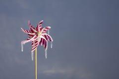 Wind Chill. Frozen Pinwheel, I miss summer Stock Photos