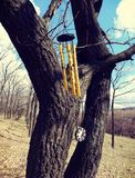 Wind Chimes hanging on a tree branch Royalty Free Stock Image
