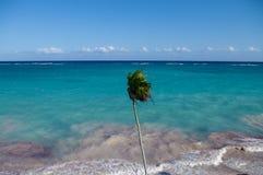 Wind on the coast of the Caribbean Sea. Mexico. Riviera Maya Stock Image