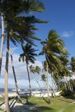 Wind in Coconut Trees, Panglao Island, Bohol, Philippines Royalty Free Stock Photos