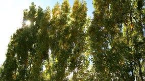 Wind in de bomen stock video