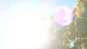Wind in de bomen stock videobeelden
