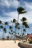 Wind de Geveegde Toevlucht van de Palm Royalty-vrije Stock Foto's
