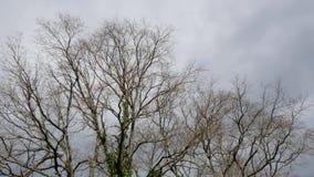 Wind in de takken van een boom stock videobeelden