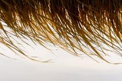 Wind, der auf Strohdach bei goldenem Sonnenuntergang durchbrennt lizenzfreie stockfotos