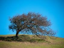 Wind die boom vormen Stock Afbeeldingen