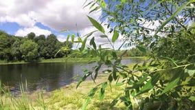 Wind die takken bosmeer waggelen onder blauwe hemel met wolken stock footage