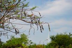 Wind driven power plants. Wind driven power plants in the back of a beautiful flamboyant at Ninh Thuan, Vietnam royalty free stock photos