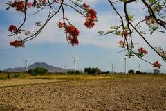 Wind driven power plants. Wind driven power plants in the back of a beautiful flamboyant at Ninh Thuan, Vietnam stock image