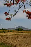 Wind driven power plants. Wind driven power plants in the back of a beautiful flamboyant at Ninh Thuan, Vietnam stock photography