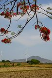 Wind driven power plants. Wind driven power plants in the back of a beautiful flamboyant at Ninh Thuan, Vietnam royalty free stock photography
