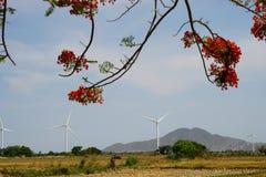 Wind driven power plants. Wind driven power plants in the back of a beautiful flamboyant at Ninh Thuan, Vietnam stock photos
