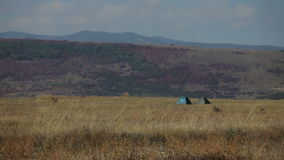 Wind in dry grass on meadow stock video footage
