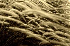 Wind durch langes Gras lizenzfreies stockfoto