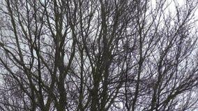 Wind durchgebrannte Bäume stock video footage