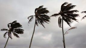 Wind durchgebrannte Palmen lizenzfreies stockfoto