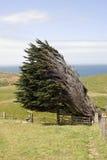 Wind durchgebrannter Baum Stockfoto