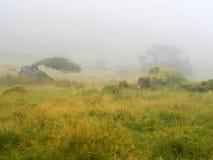 Wind en mist op de Azoren Stock Afbeeldingen