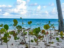 Wind en palmen op het strand van Catalonië Bavaro in de Dominicaanse Republiek stock fotografie