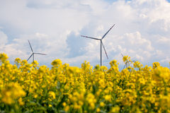 Wind energy turbines on yellow rape field Royalty Free Stock Images