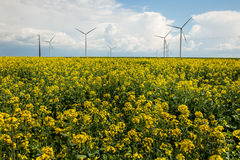Wind energy turbines on yellow field Royalty Free Stock Photography