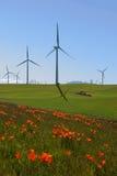 wind för Kalifornien vallmoturbiner Royaltyfri Foto