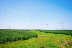 Wind Farm. Wind turbines on a farm in blue skies Royalty Free Stock Photography