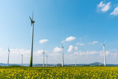 Wind farm in a blooming rapeseed field Royalty Free Stock Images