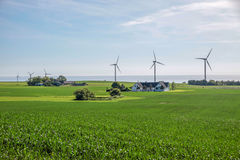 Wind farm and green fields on Bornholm Royalty Free Stock Images