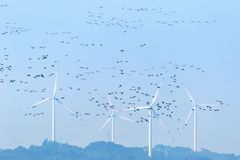 Wind farm and migratory birds. Ecology beauty in poyang lake natural reserve Royalty Free Stock Images
