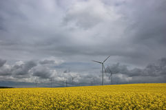 WIND FARM IN RAPE SEED FIELD Stock Photo