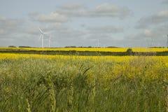 Wind farm in Saskatchewan, Canada Stock Photography