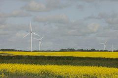 Wind farm in Saskatchewan, Canada royalty free stock photos