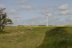 Wind farm in Saskatchewan, Canada Stock Images