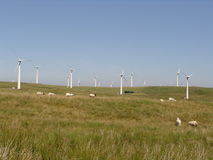 Wind farm with sheep in the Welsh hills. Wind farm in Mid-Wales with sheep royalty free stock images