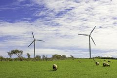 Wind farm Uk. Wind turbines on farm with animals,on top of the hill with blue and cloudy sky in background.Ecological green energy production.Care for natural stock photo