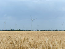 A wind farm in the wide spread field Royalty Free Stock Photography
